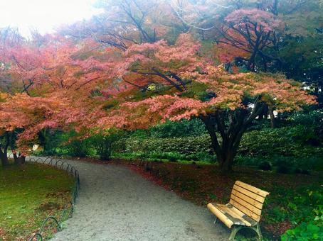 Autumn leaves and bench