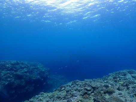 Onna Village Undersea Coral (Okinawa)