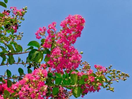 Sulpery flowers