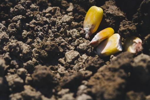 흙 위에 씨앗 3