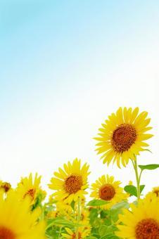 Sunflower vertical frame
