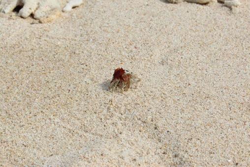 모래 위에있는 소라게