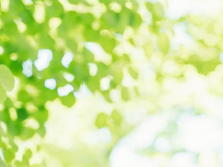 新緑イメージ・ボケ