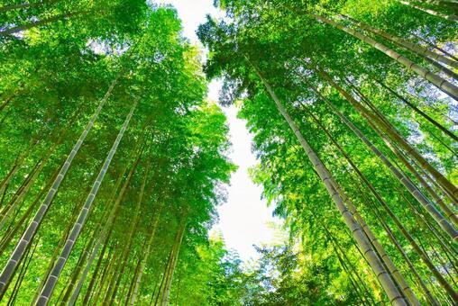 Shuzenji Bamboo Forest 01