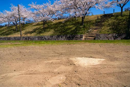 벚꽃과 야구장 홈베이스