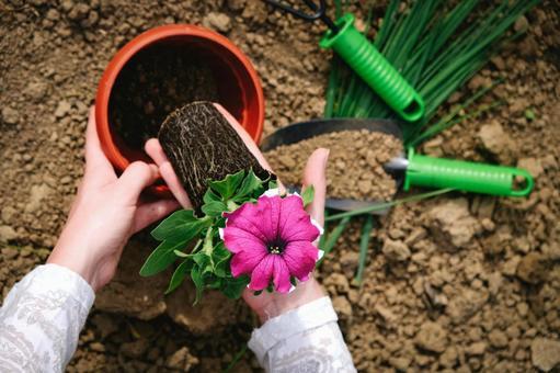 Gardening flower bed 6
