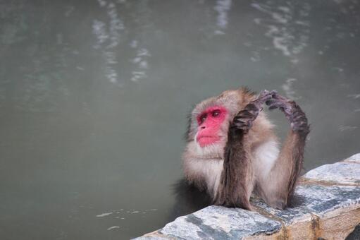 Bathing monkeys Hakodate Tropical Botanical Garden