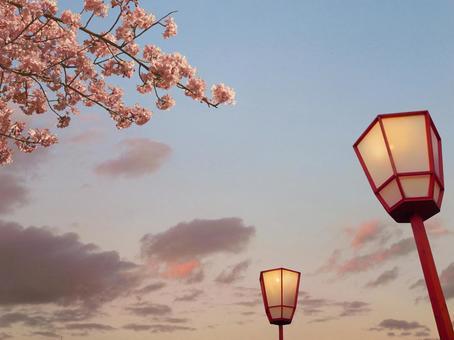 꽃놀이 벚꽃