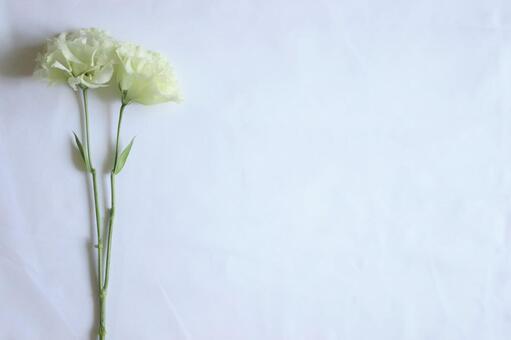 White flower table photo