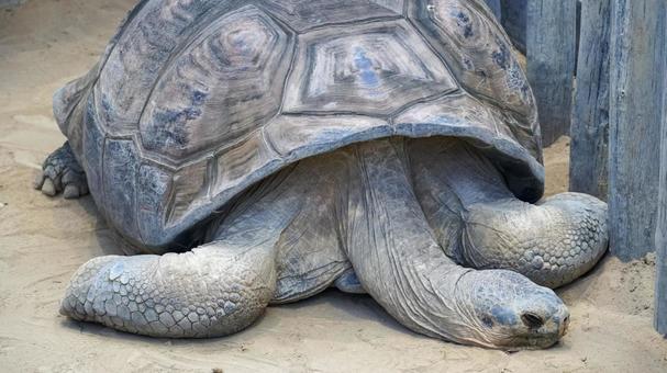 거대한 거북이 [우에노]