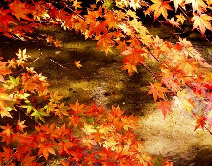 Autumn leaves 9 river surface