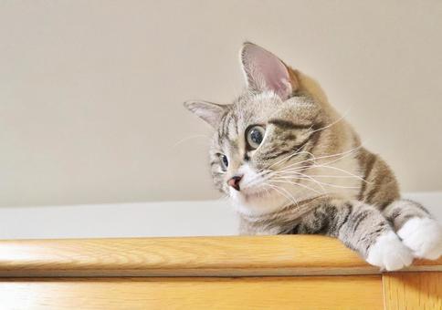 고양이, 고양이, 고양이, 귀여운 고양이, 귀여운 고양이, 양손을 모은다 고양이