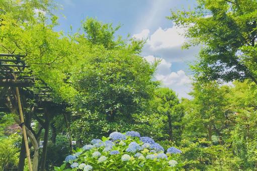 Hydrangea blooming landscape Watercolor style hydrangea background sideways