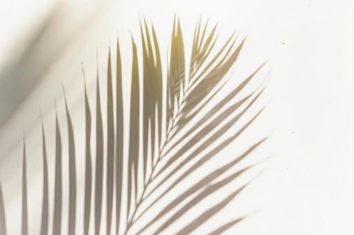 Shadow of palm tree leaves reflected in the sunlight of summer Palm tree leaves shadow painting 3
