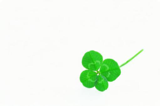 Four leaf clover happiness leaf