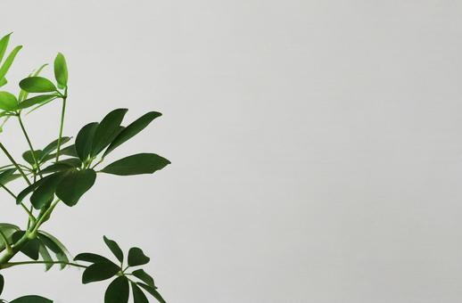 web conference background material green