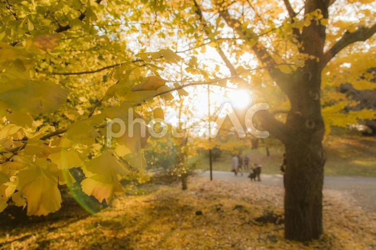 秋色に染まる国営昭和記念公園の写真