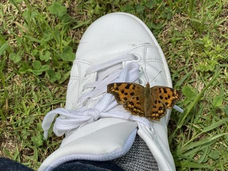 Butterflies perched on their shoes!