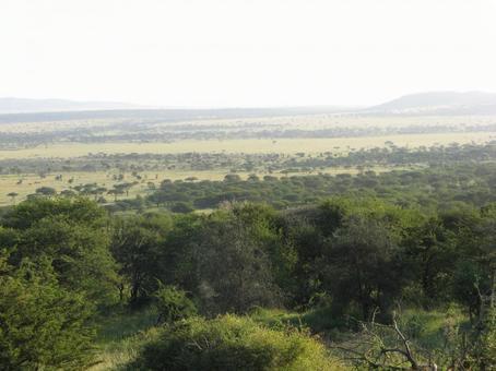 View of Serengeti