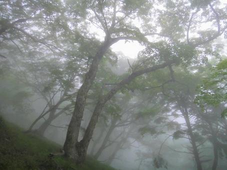 안개의 숲