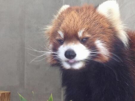 Redress Panda ①