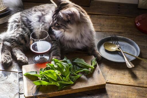 아이스 플랜트 _ 솔트 리프와 사바토라 고양이