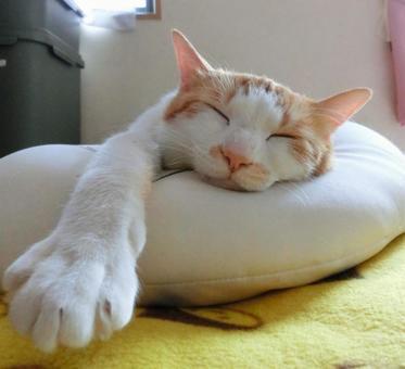 Relaxing cat 5