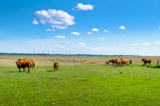 Scandinavian ranch brown cow