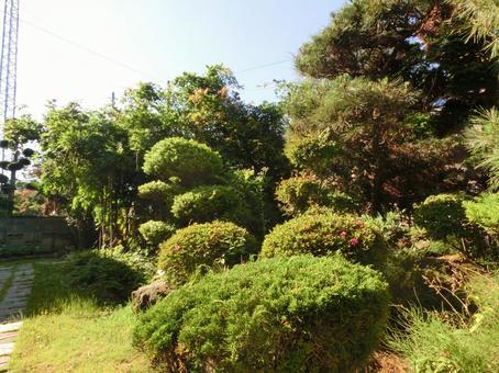 Japanese garden green Japanese green garden