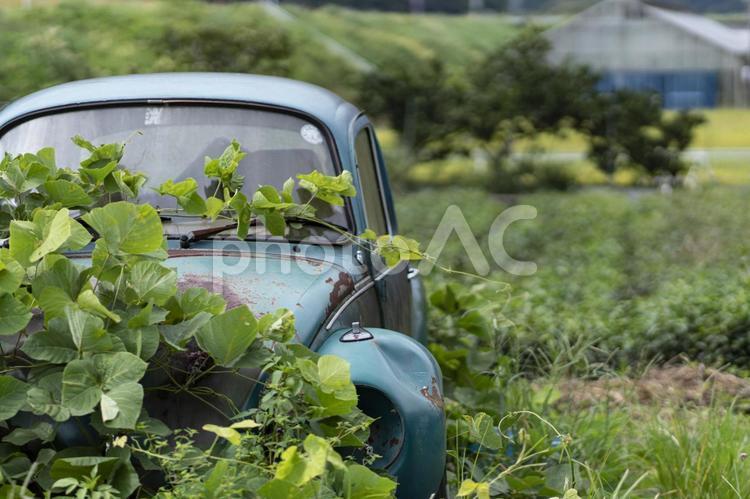 草むらの中の放置車両の写真