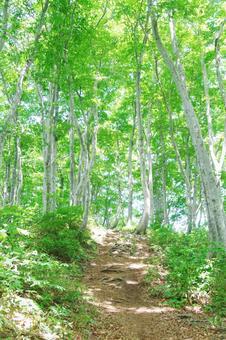 Beech forest (vertical)