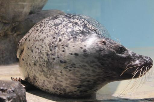 Goma seals