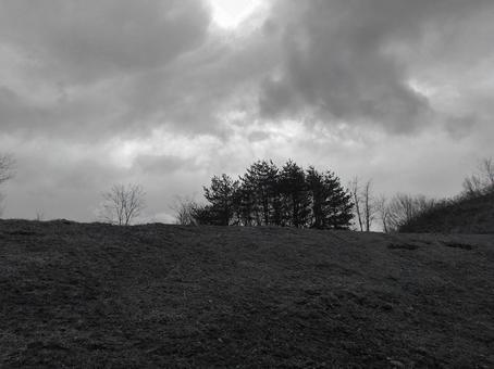침엽수 산 흑백 사진