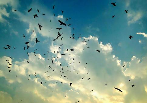 새떼와 푸른 하늘