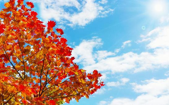 Autumn leaves and blue sky background 0514