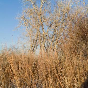 Winter trees in winter 10
