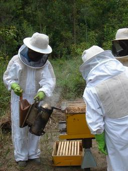 Beekeeping operations