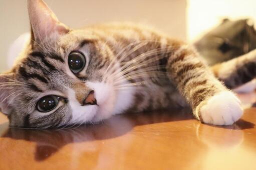 고양이 고양이 고양이 응시 고양이 응석 고양이 누워있는 고양이 응석 고양이 귀여운 고양이