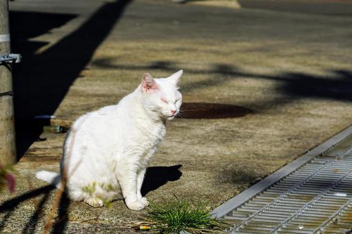 하야카와 어항 골목에 잠시 멈춰서는 흰 고양이