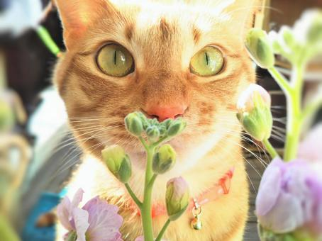 A cat that smells the scent of flowers