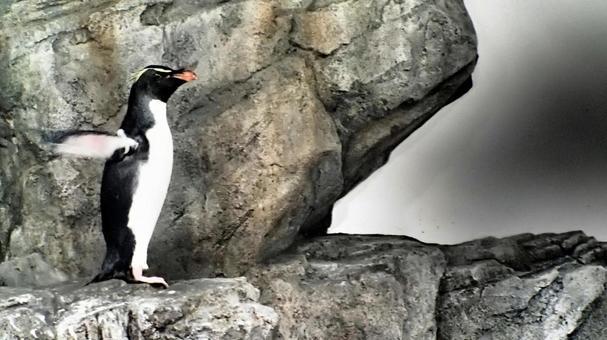 동물원의 펭귄