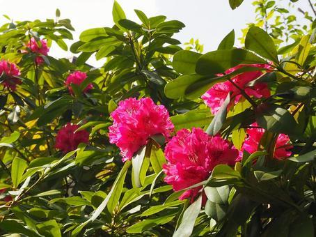 화창한 봄 햇빛에 ~ 진달래 ~