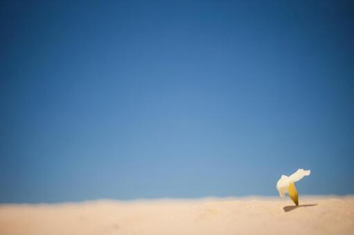 사막과 흰 꽃 1