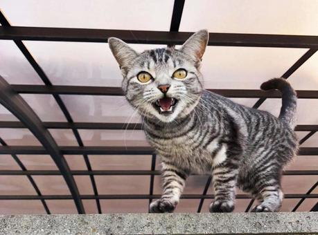 Angry stray kitten