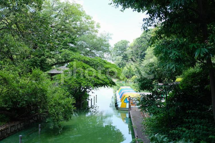 善福寺公園の写真