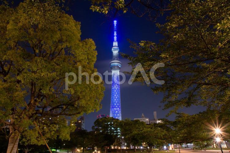 夜の隅田公園とスカイツリーの写真