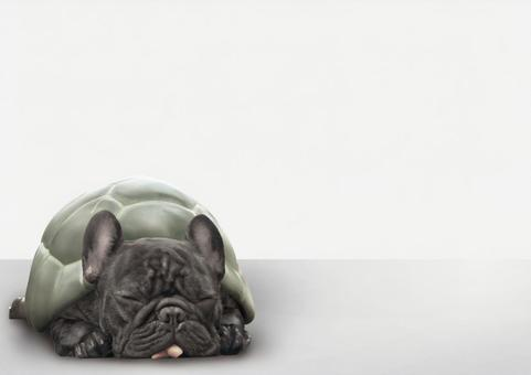 French bulldog Psd trapped in a shell