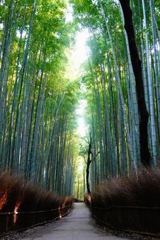 Kyoto Arashiyama Small diameter wallpaper of bamboo grove shining on light