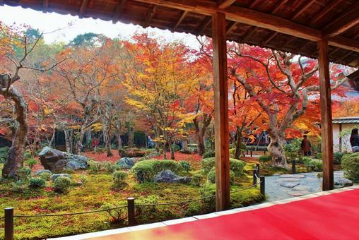 Autumn leaves of Enkoji Temple