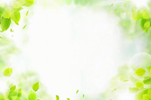 Background fresh green leaf frame sunbeams texture